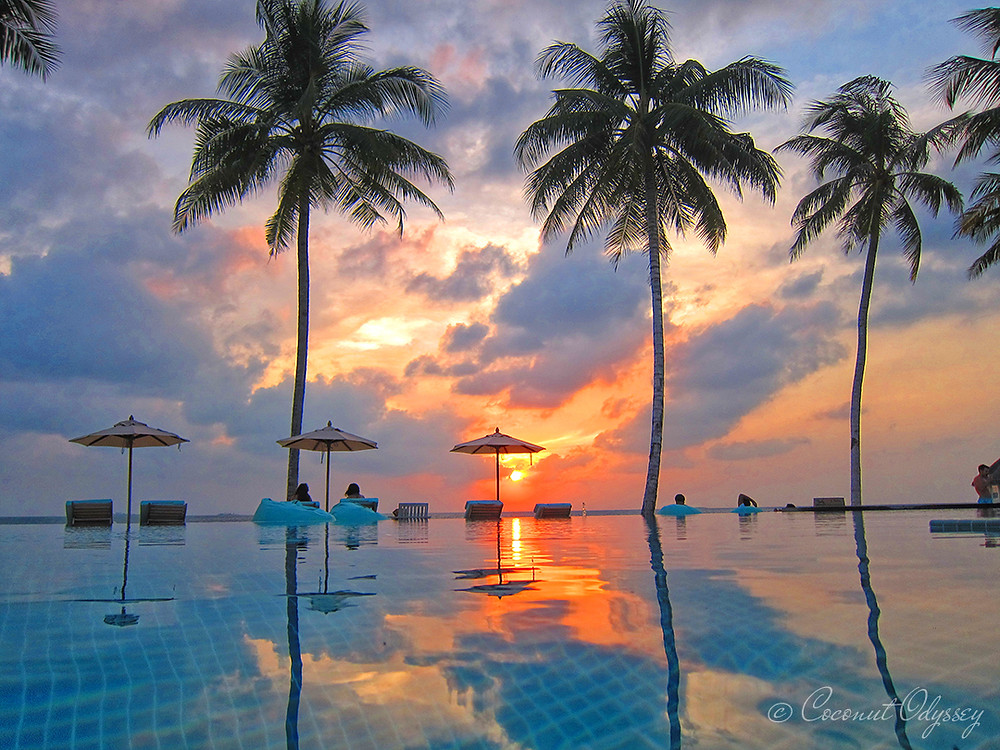 The Maldives, Diving in the Maldives, Paradise, Explore the Maldives, Maldives,  Coconut Odyssey, Snorkelling, Indian Ocean, Whale sharks