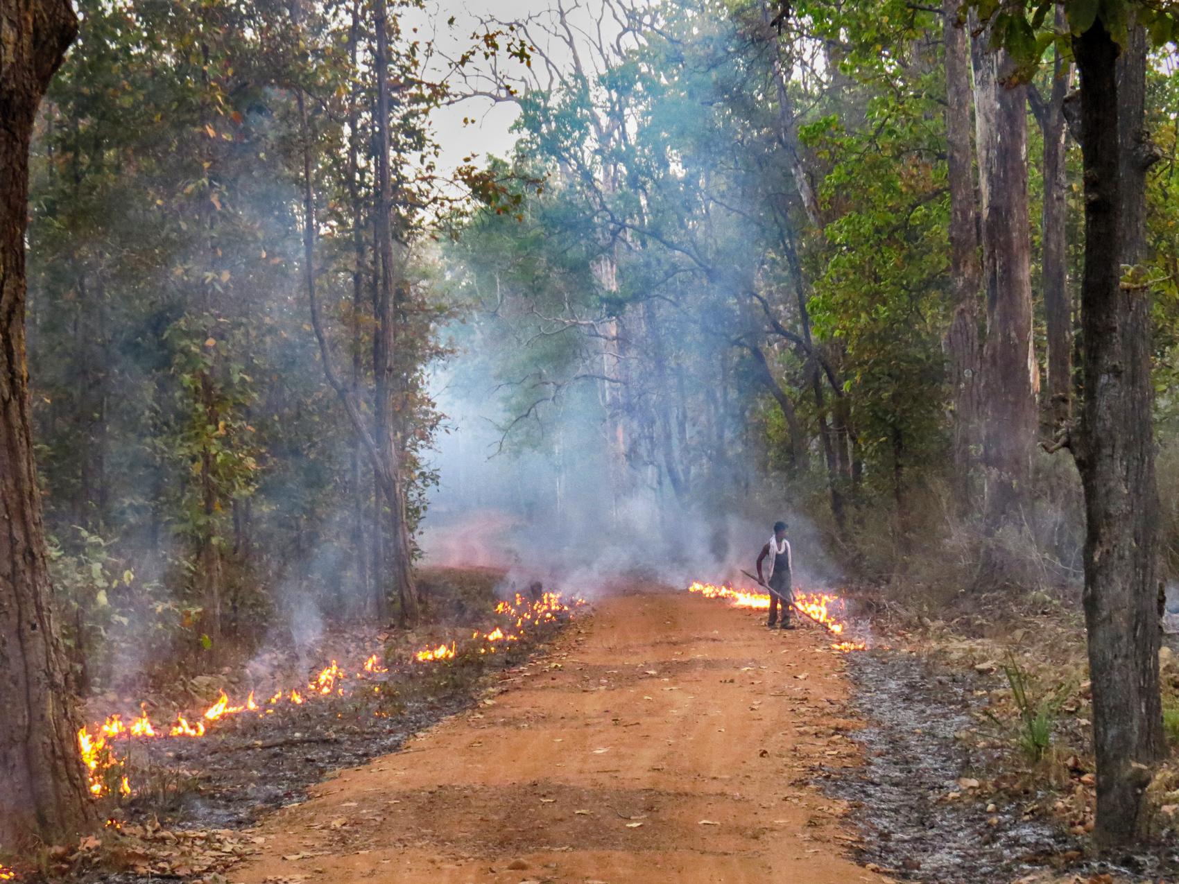 Fire Break Kanha National Park