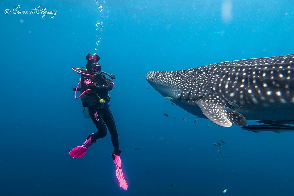 World Oceans Day 2021, Whale shark, help save the ocean