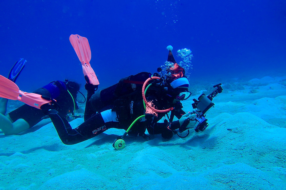 Scuba Diver Dressed As Santa Claus for Christmas wearing a santa hat pink dive fins