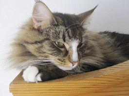 Kissa1.jpg