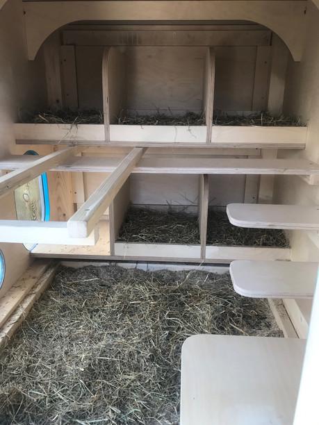 Les poules ont emménagé chez TALENTREE