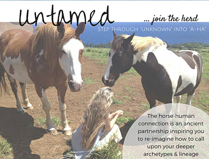 untamed-equine-therapy-horse