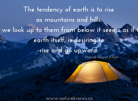RISE! Natures New Year: The tendency for everything in nature to rise