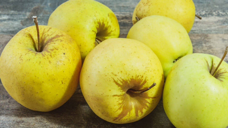Pommes pour confitures et compotes