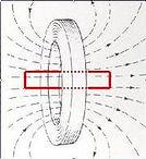 Field lines in pemf body coil