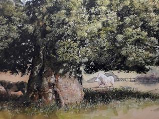 Monmouthshire Oak