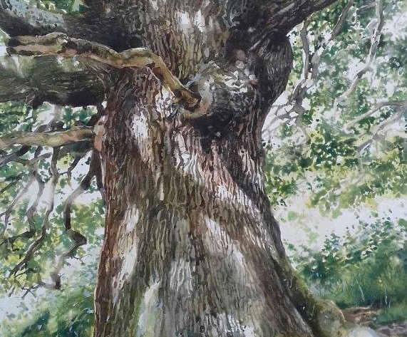 Dappled Oak