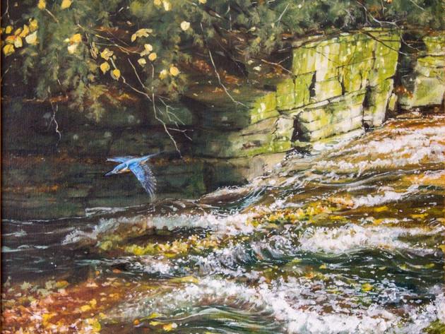 Cloddock Kingfisher