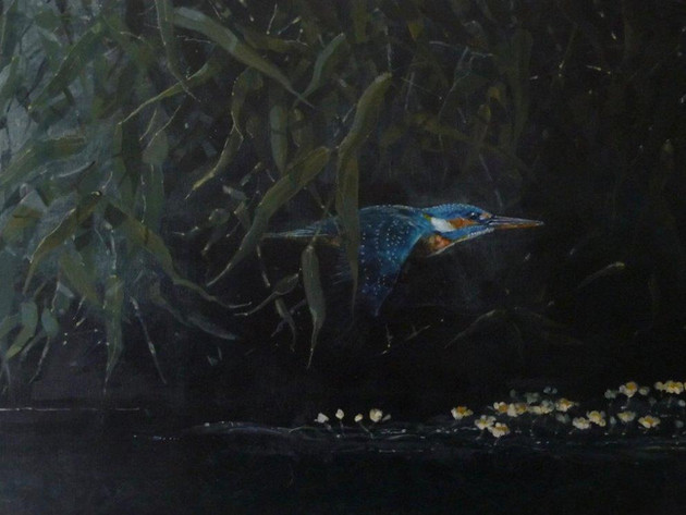 Kingfisher Through Willows