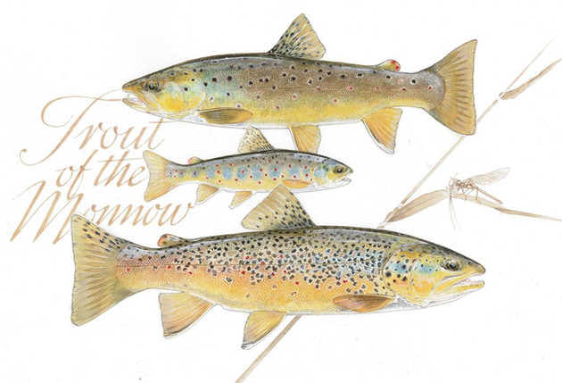 Trout Of The Monnow