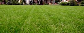 สนามหญ้า Strip