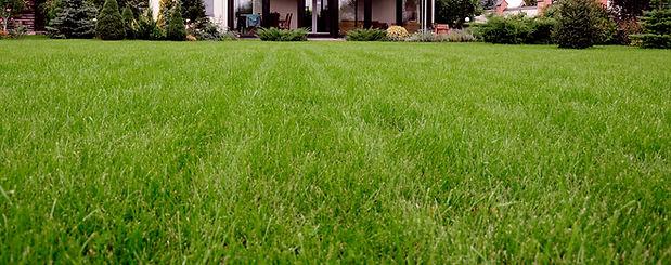 pelouse Strip
