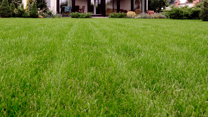 Synthetic vs. Real Lawns Part II
