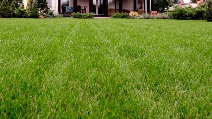Rasen vertikutieren und Rasen säen.