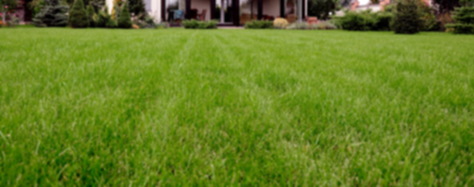 Lawn Care in Clarksville, Tennessee