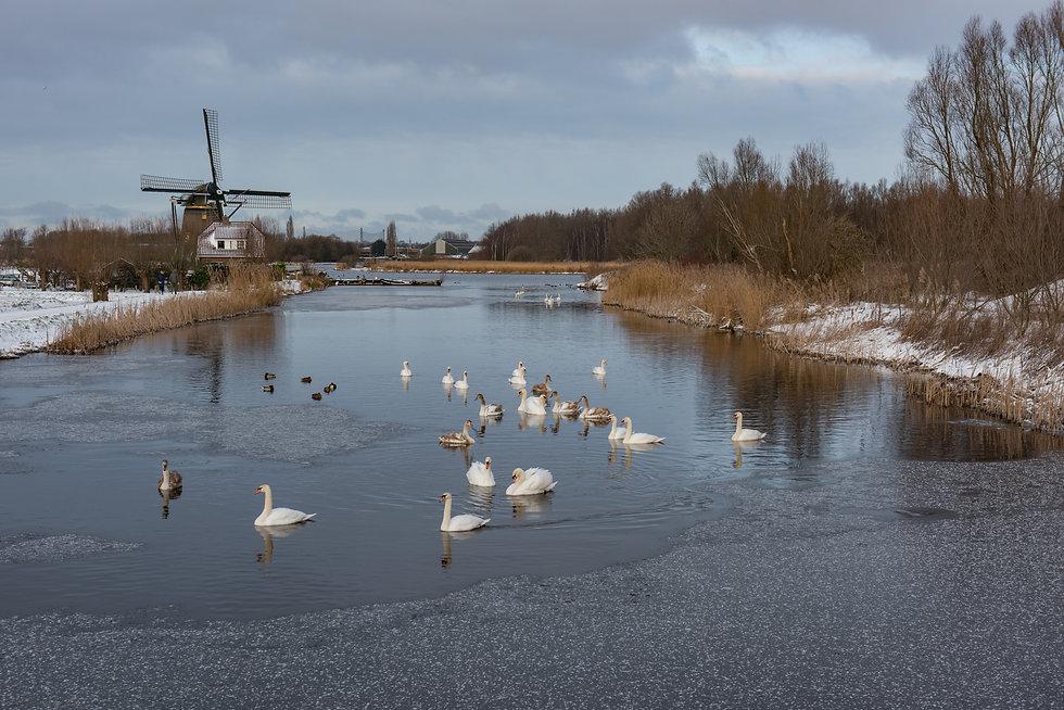 Merenwijk_feb2021_0327.JPG