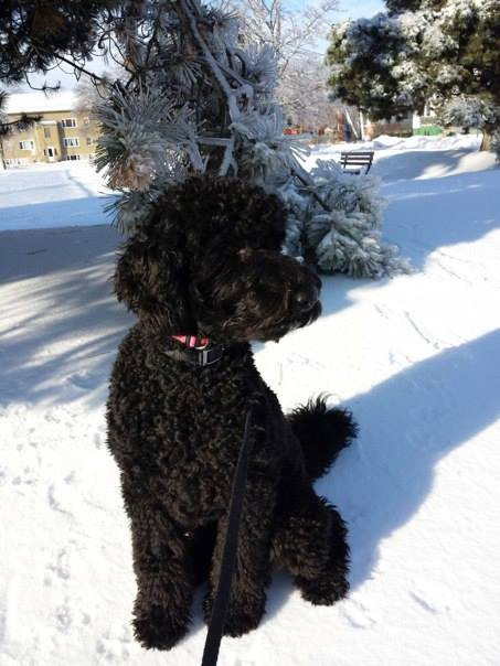Mary's black poodle named Sammy!