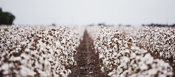 cotton-farming.jpg
