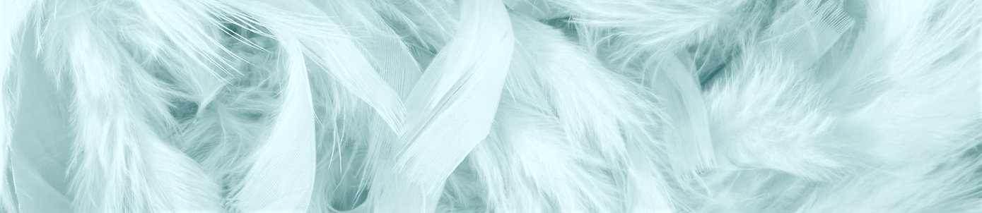 Pink%20Feathers_edited.jpg