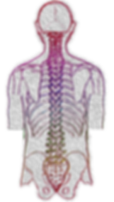 spine-4052599_1920.png