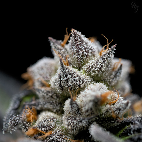 GSC2_paris_5-20.jpg