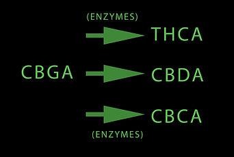 Enzymes.jpg