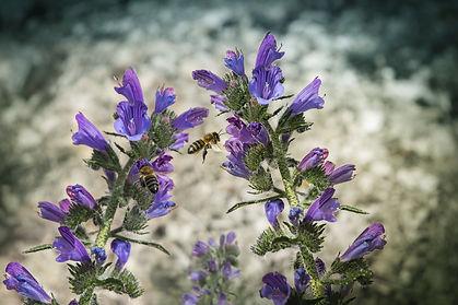 flowers-3994863_1920.jpg