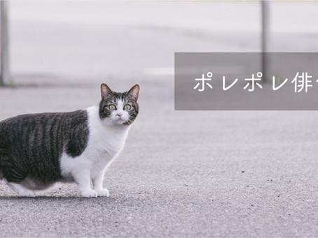 桜とぶらんこ 4月ポレポレ俳句部発表