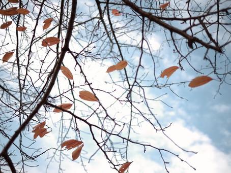 11月ポレポレ俳句部 作品発表 冬がはじまるよ