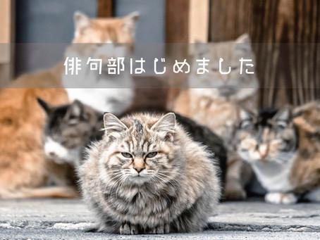 ポレポレ俳句部、始動