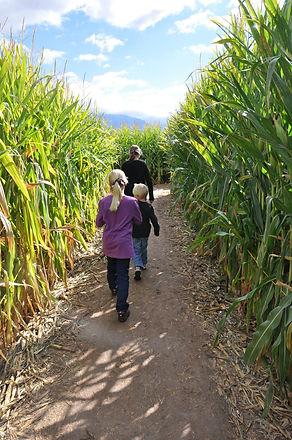 Copy of corn maze.jpg