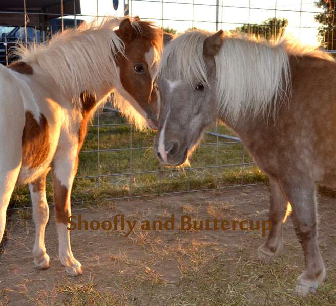 Copy of Buttercup and Shoofly.jpg