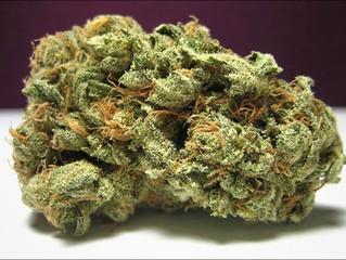Cannabidiol (CBD) and Cannabis for Mental Focus and Acuity