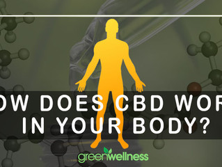How does CBD work in your body?