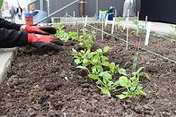 Planting Events 057.JPG