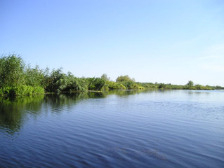 Five Ways Streams and Wetlands Keep Us and Our Environment Healthy