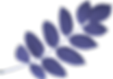 kisspng-maple-leaf-acacia-leaves-5a9d261