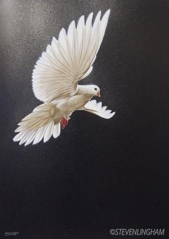 Descending Dove