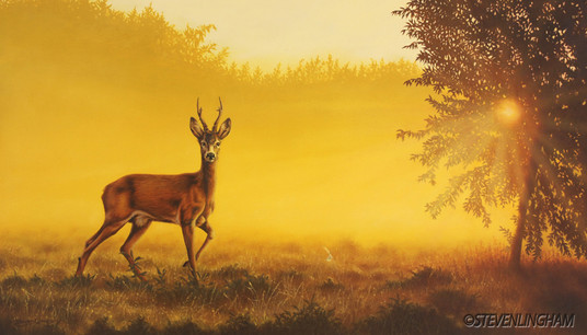 Midsummer Mists
