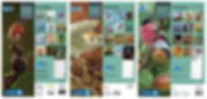 RSPB Calendar.jpg