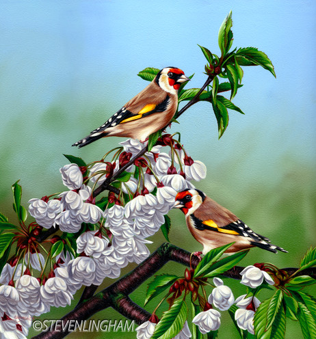 Gold Finches In Blossom