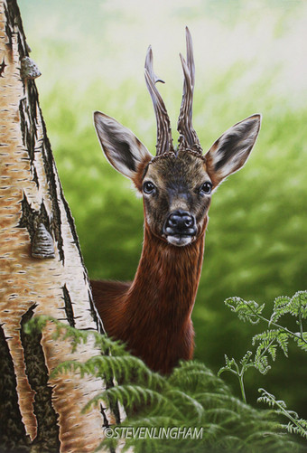 Woodland Encounter