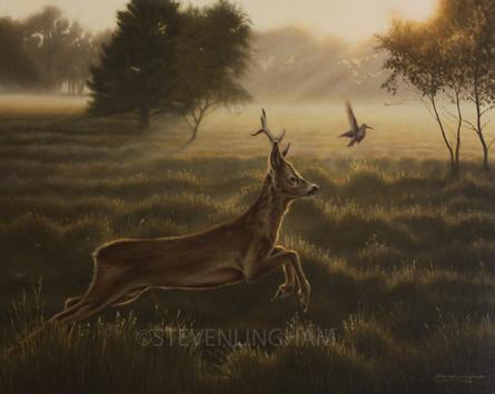 Disturbing the Peace- Roe Deer