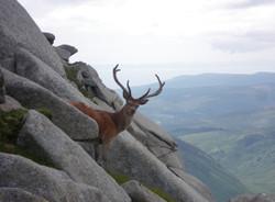 deer cir mhor - listing size