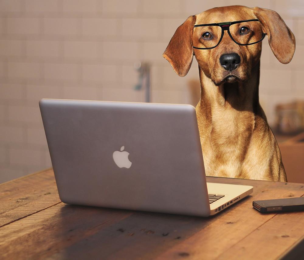 Ahora en Italia los empleados de la Unicredit de Milán podrán llevar sus perros a la oficina.