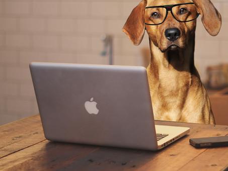 Cani in ufficio? Riducono lo stress e aumentano la produttività - Italia
