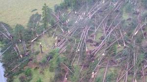 Bosque  dañado por la inundación