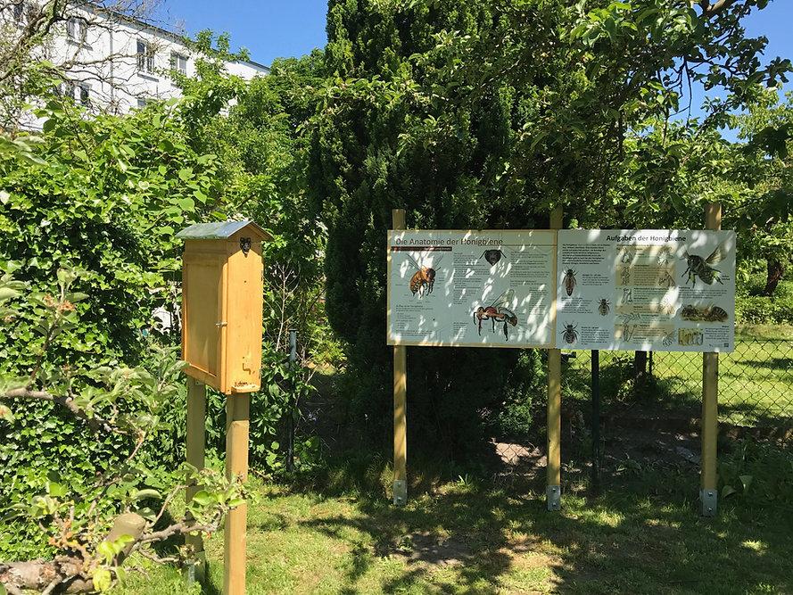 Bienen2.jpg