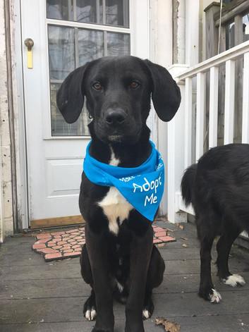 Dali- Adopted (5/5)
